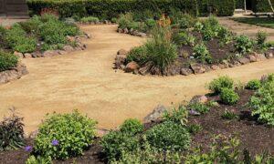Drought tolerant backyard design