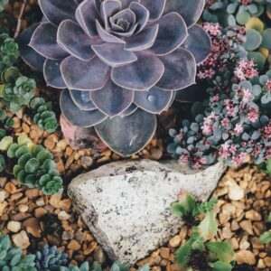 Succulent and rock garden
